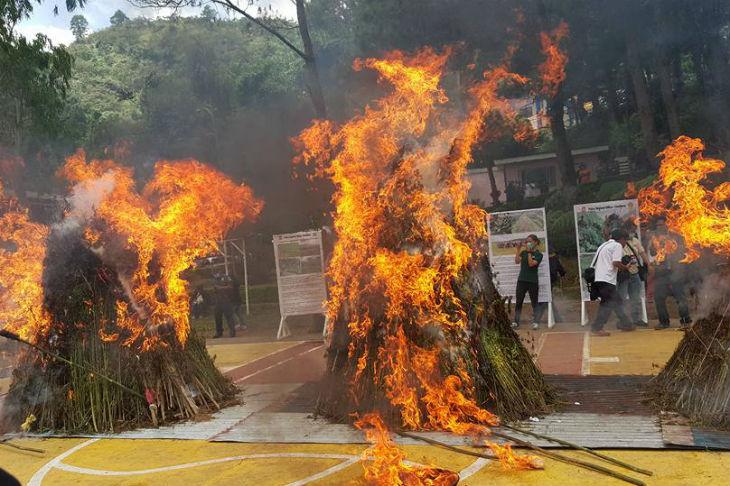 LOOK: 'Bato' leads burning of P2-M worth marijuana 4