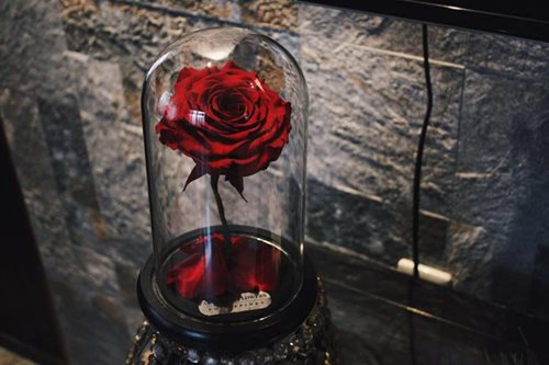 LOOK: A real-life 'Enchanted Rose'