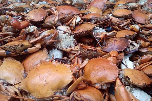 LOOK: Mountain of crabs in Lanao town