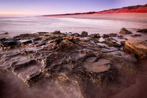 'Unparalleled' number of dinosaur tracks found in Australia