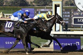 Horse wins 'wrong race' at 50-1