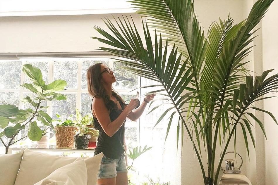 photo from milesaubrey on insgram - Indoor Garden