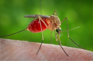 Things you must know about Japanese encephalitis