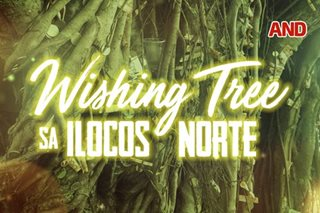 Wishing Tree sa Ilocos Norte
