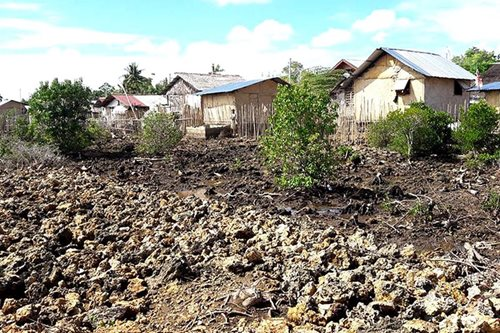 DENR reclaims mangrove area transformed into subdivision