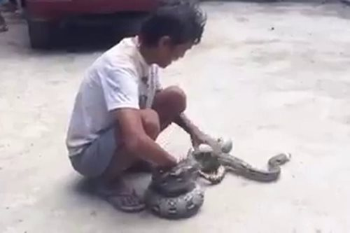 Snake bites man in Cebu