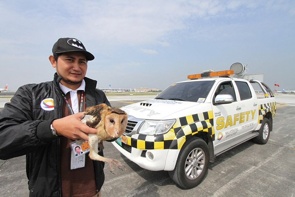 Fowl intruder at airport