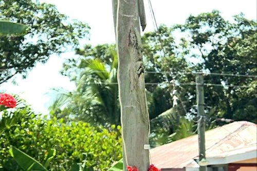 LOOK: Residents see image of Jesus Christ on electric post