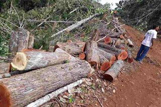 Thousands of trees cut down in Palawan after Gina Lopez DENR exit