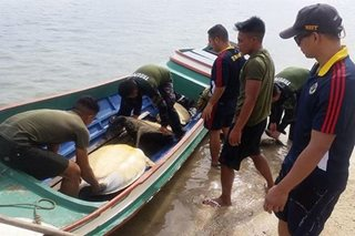 12 abandoned sea turtles rescued in Palawan