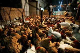 PH records first avian flu outbreak