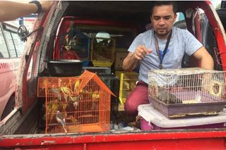 DENR nabs man selling over 140 rare animals in Cebu