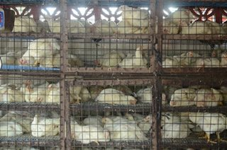 Loans for farmers in bird flu areas available next week