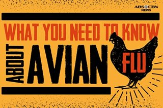 What you need to know about avian flu