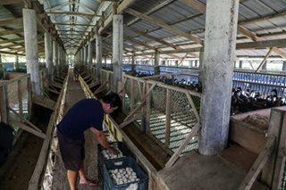Tsekeng ipinamahagi sa poultry farmers dahil sa bird flu, wala pa palang pondo