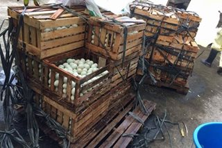 Thousands of seized duck eggs from Pampanga destroyed