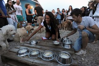 Beer for dogs on menu in Croatia's only beach bar for canines