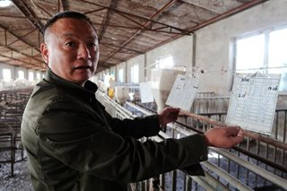 No joke: China's war on pollution roils world's top pig farming sector