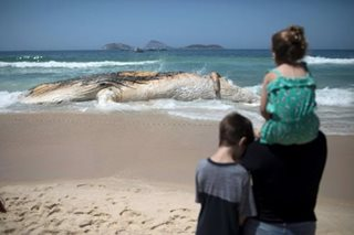 Dead whale surprises swimmers at iconic Rio beach