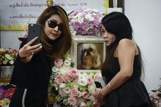 101 cremations: the rise of Bangkok's Buddhist pet funerals