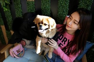 An investor's best friend: China's booming pet market sparks deals