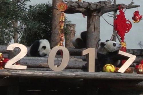 PANOORIN: Mga panda, nakiisa sa pagsalubong sa Spring Festival