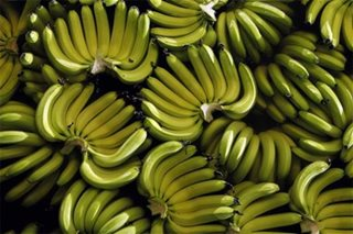 PH banana industry recovering from export disruption caused by COVID-19 outbreak