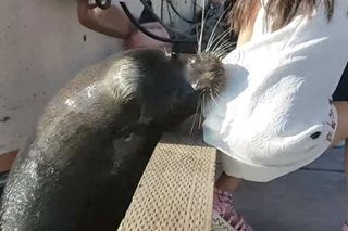 VIRAL: Sea lion pulls girl into water