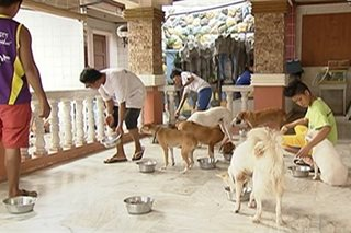 This couple rescues disabled dogs in Aklan