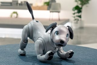 Old dog, new tricks: Sony unleashes 'intelligent' robot pet
