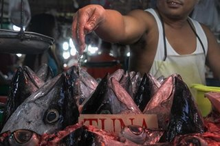 Philippines tries to turn the tide on fish losses