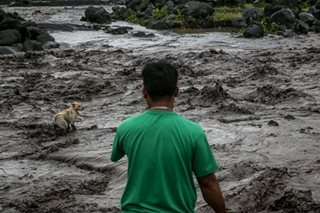 Dog rescued from lahar from Mayon
