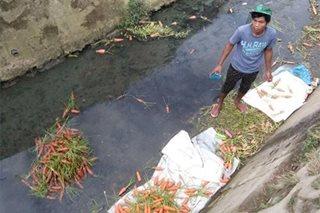 Ilang tindero, nahuling naghuhugas ng carrots sa maruming creek sa La Trinidad