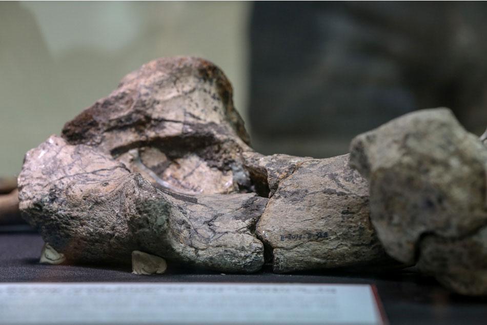 Still at large: 'Kalinga toolmaker' who butchered rhino 709,000 years ago 3