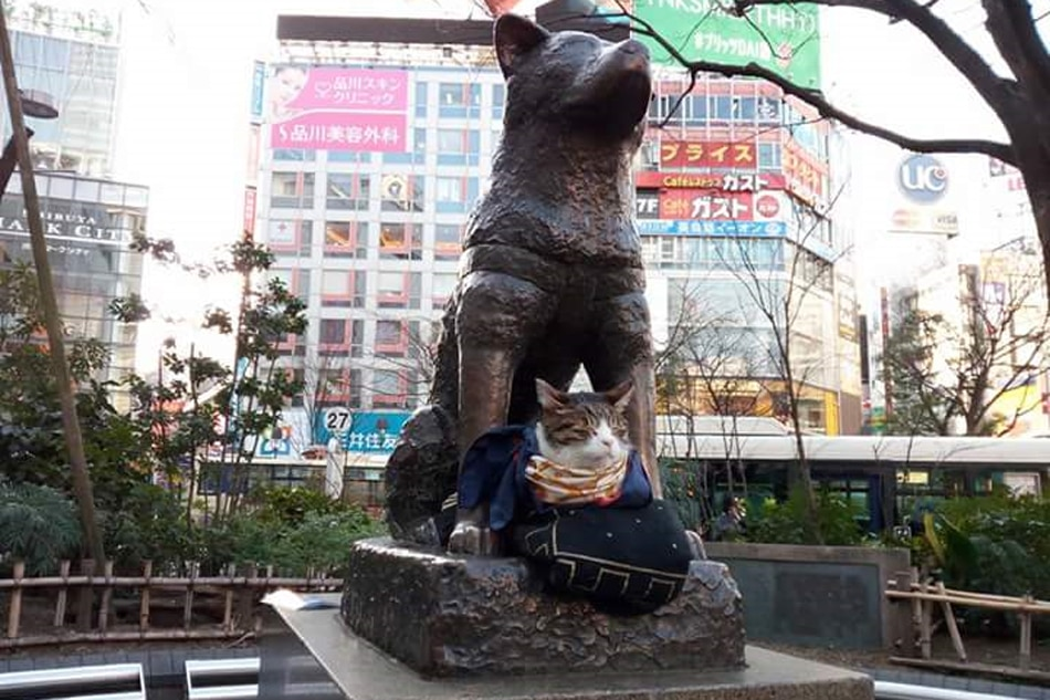 look  hachiko finds a new companion in tokyo
