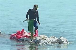 Pinsala ng fish kill sa Pangasinan, umabot na sa P86 milyon