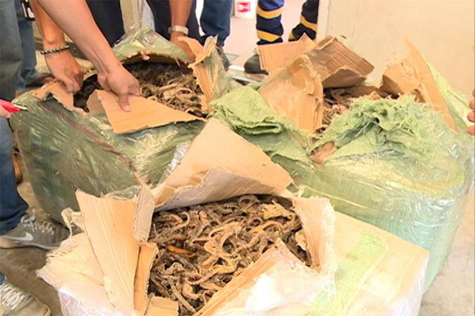 P1.2-milyong halaga ng seahorse nasabat sa Bacolod-Silay Airport 1