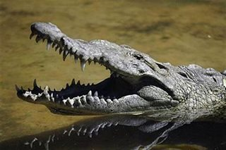 Australia monster croc caught after eight-year hunt