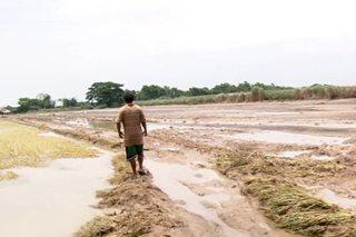 P180 milyong halaga ng agrikultura, napinsala ng baha sa Nueva Ecija