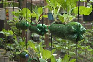 Urban gardening na nakikitang solusyon sa food insecurity, isinusulong