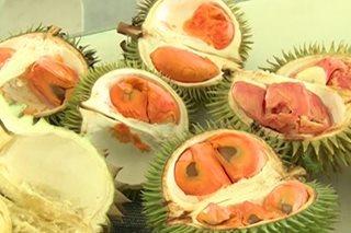 Mga bagong klase ng durian, patok sa Davao