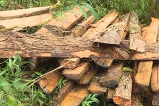 Daan-daang tabla, nasamsam sa Benguet
