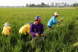 Farmer's group seeks higher tariffs on imported rice