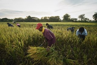 Dissecting Data: Impact of Rice Tariffication Law on Filipino Farmers