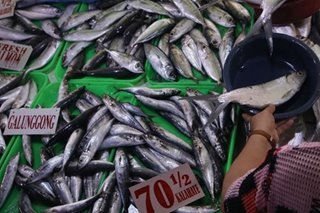 Pinoys say fish now smaller but more expensive: SWS
