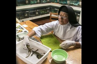 Sister salamander: Nuns get hands dirty to save Mexico salamander