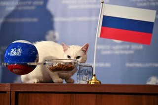 Furry forecast: 'Psychic' cat picks Russia to win World Cup opener