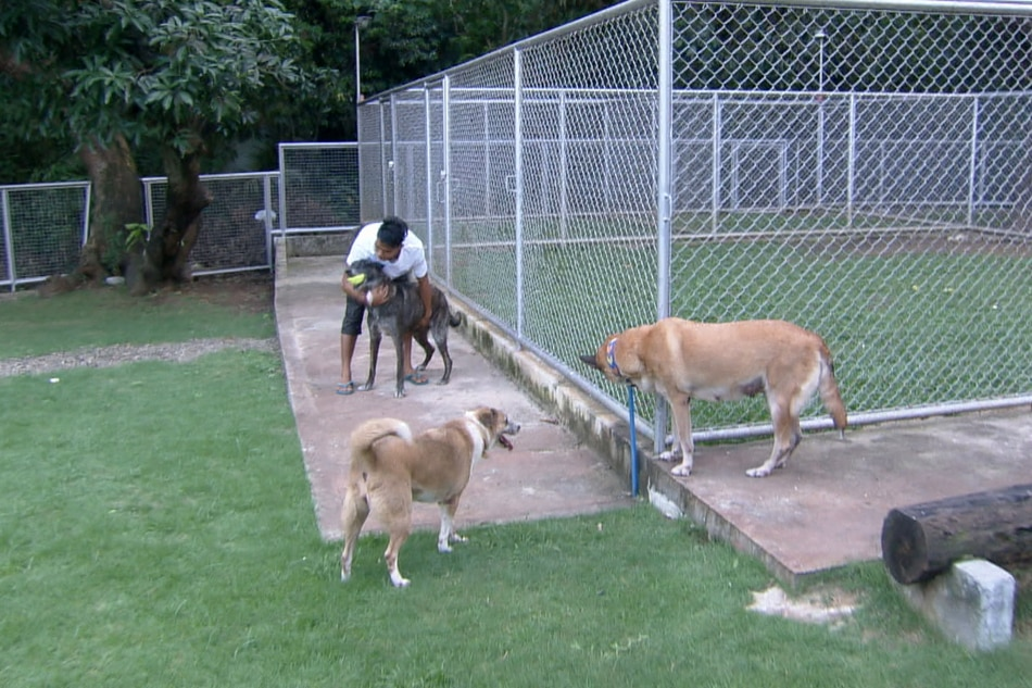 PANOORIN: Retirement home ng military dogs