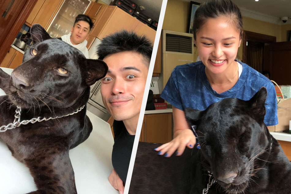 WATCH: Xian spends birthday with Kim Chiu, gets her to pet a black panther