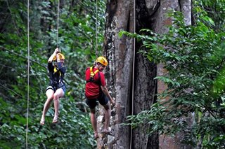 Tourist dies in Aussie jungle zipline fall